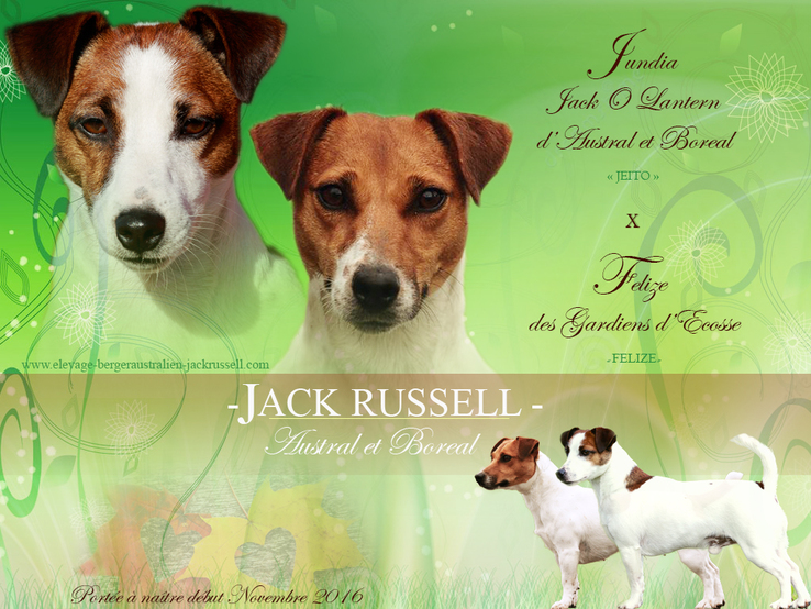 mariage jack russel